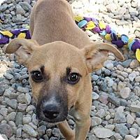 Adopt A Pet :: Andi - Clear Lake, IA