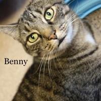 Adopt A Pet :: Benny - Cumming, GA