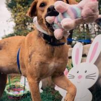 Adopt A Pet :: Ember - New Freedom, PA