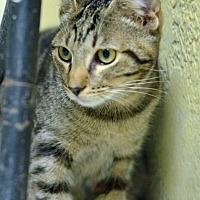 Adopt A Pet :: 10312090 - Brooksville, FL