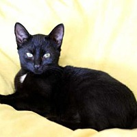 Adopt A Pet :: CLEOPATRA - Sussex, NJ