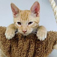 Adopt A Pet :: Buster - Davis, CA