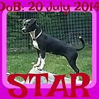 Adopt A Pet :: STAR - Sebec, ME