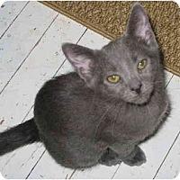 Adopt A Pet :: Frisky kitten - Cincinnati, OH