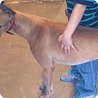 Adopt A Pet :: Rhino - Pearl River, LA