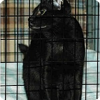 Adopt A Pet :: Fred - Warminster, PA