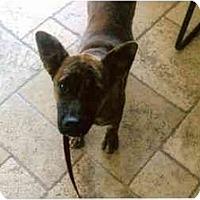 Adopt A Pet :: Jazzy - Scottsdale, AZ