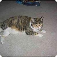 Adopt A Pet :: Cali - Quincy, MA