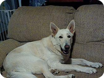 German Shepherd Dog Dog for adoption in Randleman, North Carolina - Sheba