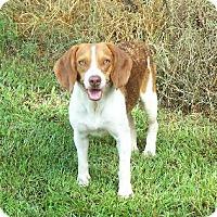Adopt A Pet :: Parker - Lafayette, LA