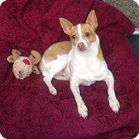 Adopt A Pet :: Sunny - Sonoma, CA