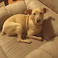 Adopt A Pet :: Chessie - Hazard, KY