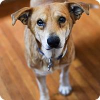 Adopt A Pet :: Fred - Cincinnati, OH