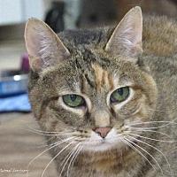 Adopt A Pet :: Petie - Hartville, WY