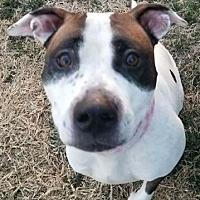 Adopt A Pet :: Puffin - Wichita, KS