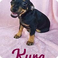 Adopt A Pet :: Kyra - San Antonio, TX