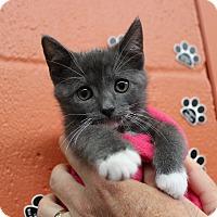 Adopt A Pet :: Dayton - Sarasota, FL