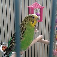 Adopt A Pet :: No name - Villa Park, IL