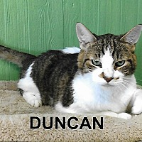 Adopt A Pet :: Duncan - Medway, MA