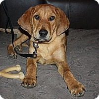 Adopt A Pet :: Sandy - PENDING, in Maine - kennebunkport, ME