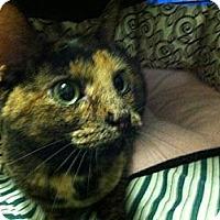 Adopt A Pet :: Sophia - Port Republic, MD