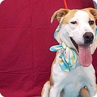 Adopt A Pet :: Dallas - Fresno, CA