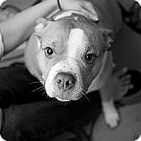 Adopt A Pet :: LIZZY - Plano, TX