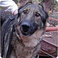 Adopt A Pet :: Sabrina - Pike Road, AL