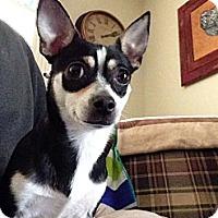 Adopt A Pet :: Aspen - Mt Gretna, PA
