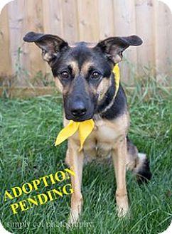 German Shepherd Dog Mix Dog for adoption in Winnipeg, Manitoba - ARYA