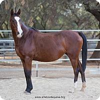 Adopt A Pet :: Jolene - El Dorado Hills, CA