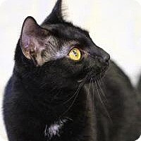 Adopt A Pet :: Carly - Pompton Plains, NJ