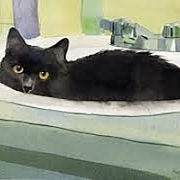 Adopt A Pet :: MISS KITTY - Sweetheart - Rochester, NY