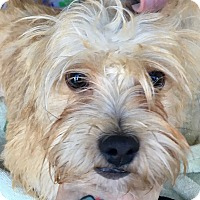 Adopt A Pet :: Mikey bonded with Mickey - Las Vegas, NV
