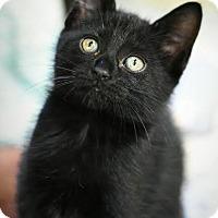 Adopt A Pet :: Roz - Aiken, SC