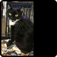Adopt A Pet :: Norah - Fallbrook, CA