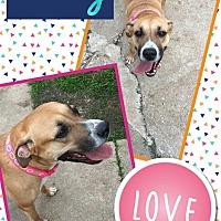 Adopt A Pet :: Honey - Unionville, VA