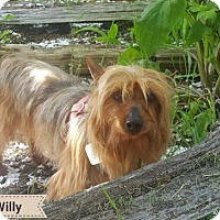 Adopt A Pet :: WILLIE - dog friendly little jogger - Seattle, WA