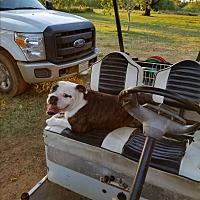 Adopt A Pet :: Zona - Austin, TX