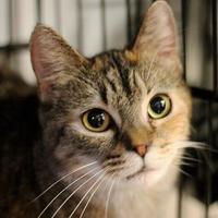 Adopt A Pet :: Charm - Huntingdon, PA