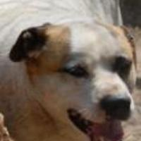 Shepherd (Unknown Type) Mix Dog for adoption in Wichita, Kansas - mutt