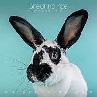 Adopt A Pet :: Penelope - Sheboygan, WI