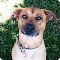 Adopt A Pet :: Goku - New Kensington, PA