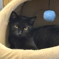 Adopt A Pet :: Dr. Moore - Livingston, MT