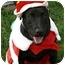 Photo 1 - Labrador Retriever/Border Collie Mix Dog for adoption in Sacramento, California - Odi water pup