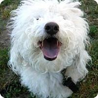 Adopt A Pet :: Coco - Cheyenne, WY