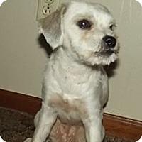 Adopt A Pet :: Karlee - Danbury, CT