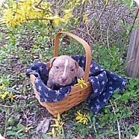 Adopt A Pet :: Male # 6 - Roaring Spring, PA