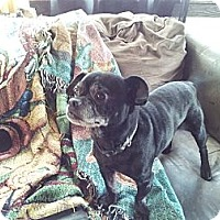 Adopt A Pet :: Toto - Middlesex, NJ
