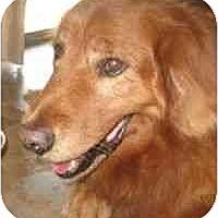 Adopt A Pet :: Stanley - Scottsdale, AZ